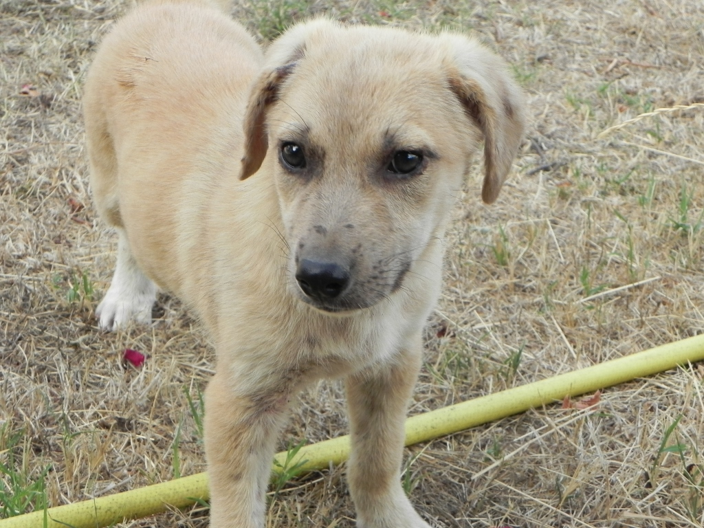 Cani In Regalo A Spoleto Pg Annuncianimaliit