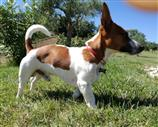 Jack Russell a Monza