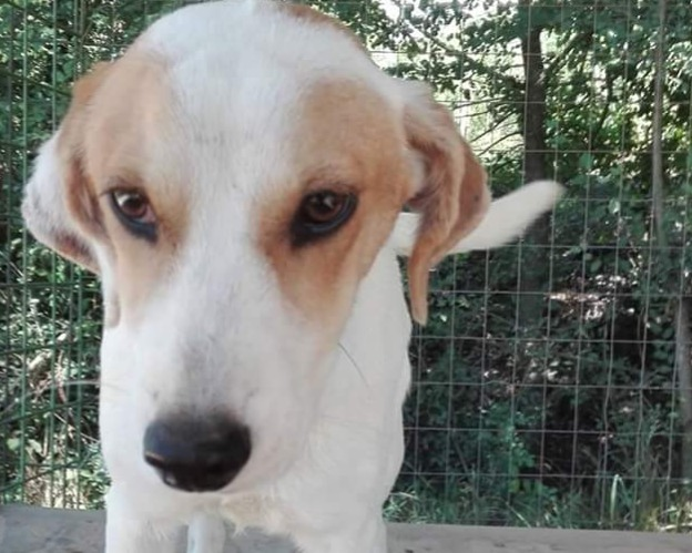 Cani In Regalo A Viterbo Annuncianimaliit