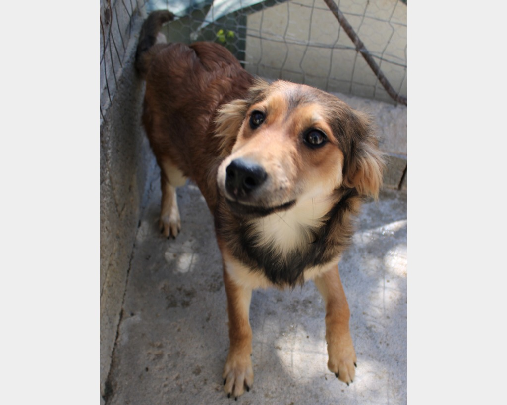 Cani In Regalo In Calabria Annuncianimaliit