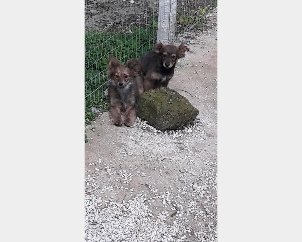 Cani In Regalo In Toscana Annuncianimaliit