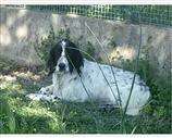 Setter a Lucca