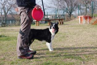 Border Collie a Napoli