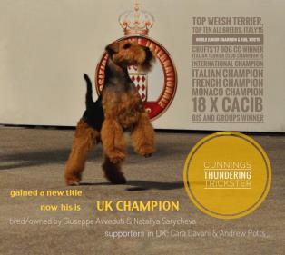 Fox Terrier a Asti