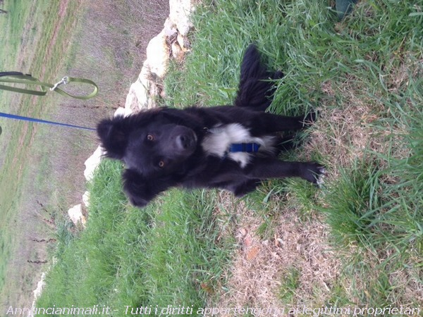 Regalo Cani Taglia Media: RONDA MIX COLLIE E BORDER COLLIE