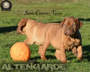 Dogue de Bordeaux a Frosinone