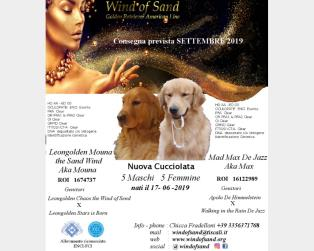 Golden Retriever a Cagliari
