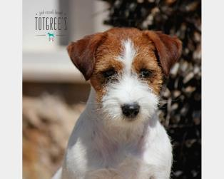 Jack Russell a Brindisi