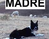 Border Collie a Enna