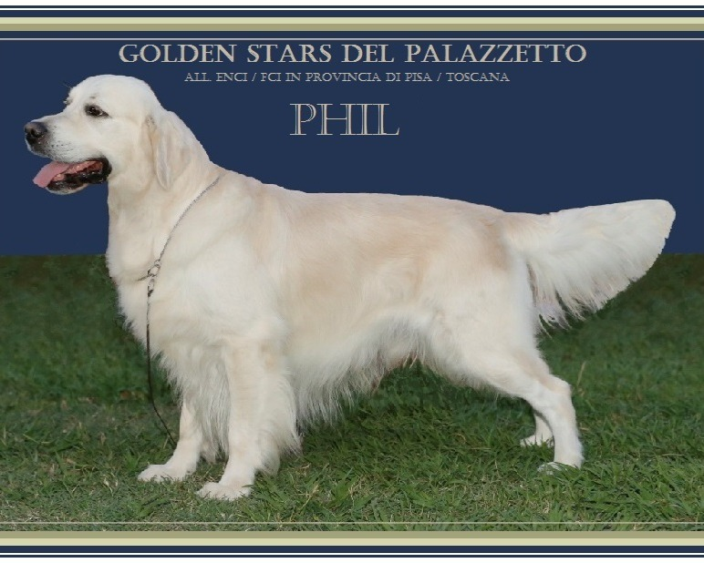 Golden Retriever a Pisa